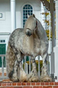 Silver Dollar standing at stud at Dungarvan Feather.