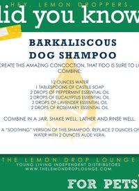 Need to try this all-natural essential oil dog shampoo on our stinky Rottweiler! #lemondropper