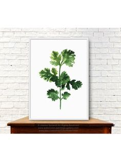 Cilantro Art Print, Chinese Parsley Painting, Foodart Kitchen Decor, Fresh Coriander Poster, Herbs And Spices Green Watercolor Illustration