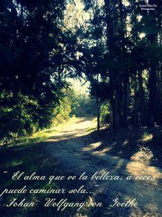 """""""El alma que ve la belleza, a veces puede caminar sola"""".  Johan Wolfgang von Goethe"""