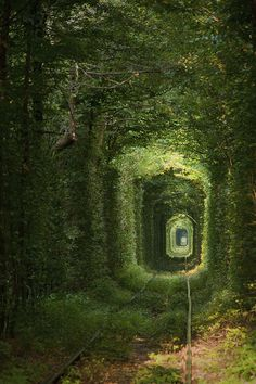 Found deep in the forests of Ukraine, the Tunnel of Love was formerly used to transport industrial goods from a nearby factory.