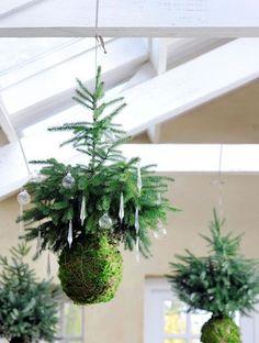 Het is nog een beetje vroeg maardeze vliegende kerstboompjes staan in onze nieuwe agenda voor 2015 en nu dus ook op de site. Kerst hangt in de lucht. Letterlijk en figuurlijk, met geurige, groene zelfgemaakte versieringen. Nodig: • 3 stuks Picea omorika met kluit (Tuincentrum Overvecht) • plaatmos (Tuincentrum Overvecht) • koperbinddraad • stevig touw...