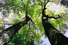 Tree Burials - Indigenous tribes in many parts of the world discovered that the best way of disposing the dead was to put them up high, rather than down below. Groups in Australia, British Columbia, the American southwest and Siberia were known to practice tree burial, which involved wrapping the body in a shroud or cloth and placing it in a crook to decompose.