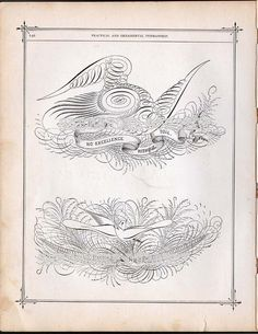 i am in LOVE with this (tattoo inspiration)  Fancy Birdwing Flourishes Victorian Calligraphy 1886