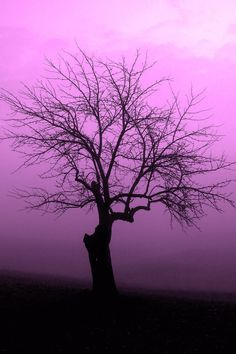 Tree of Life Magenta original photography by Dianne Rose at StudioRoad354, $30.00