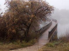 Dia de niebla en el PARQUE NACIONAL DE LAS TABLAS DE DAIMIEL - Ciudad Real - España