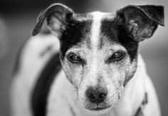 https://flic.kr/p/wtA8PF | black and white and annoyed 365 115