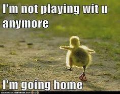 I not play With u  !!!!!!!!!!!!!!!!!!!!!!!!!!  #animal #funny #animals #lough #meme #socialmedia #malta www.ICanDoThings.com