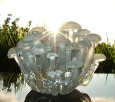 glass mushrooms..enlarge to see glass quality