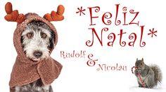 Rudolf e Nicolau, uma história de Natal... - Love Pet Food