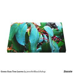 Green Gum Tree Leaves