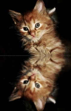 Cat reflections