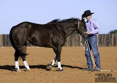 The most important role of equestrian clothing is for security Although horses can be trained they can be unforeseeable when provoked. Riders are susceptible while riding and handling horses, espec… Horse Training Tips, Horse Tips, My Horse, Equestrian Outfits, Equestrian Style, Clinton Anderson, English Riding, Horses And Dogs, Horse Care