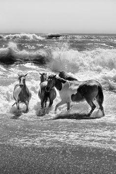 Wild Horses at Beach Play