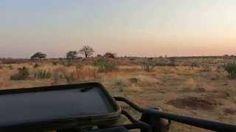 L'alba nella savana, Uno spettacolo della natura  Risaleomar - YouTube