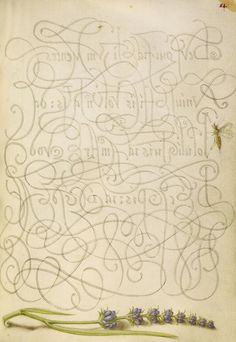 "Insect and Hyssop, in ""Mira calligraphiae monumenta"", calligrapher: Georg Bocskay (died 1575) in 1561/2, illumination: Joris Hoefnagel (1542-1600) in 1591/6"