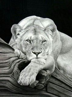 Secrets Of Drawing Realistic Pencil Portraits - Realistic Animal Pencil Drawings can hardly believe this is not a photo. The textures are perfect-k Secrets Of Drawing Realistic Pencil Portraits - Discover The Secrets Of Drawing Realistic Pencil Portraits Realistic Animal Drawings, Pencil Drawings Of Animals, Hard Drawings, Drawing Animals, Pencil Drawing Tutorials, Drawing Ideas, Drawing Poses, Drawing Projects, Tier Fotos