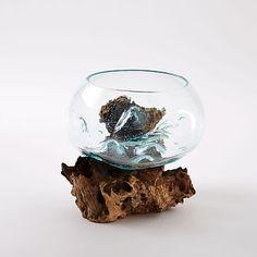 Wood + Glass Terrariums #westelm