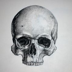 realistic skull drawing - Google Search