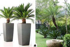 Cica, conheça esta e mais 25 plantas resistentes ao sol.