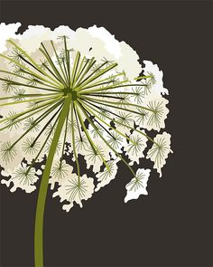 /\ /\ . queen anne's lace