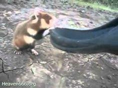 Angry karate hamster
