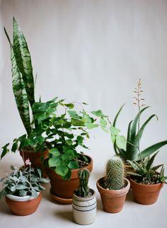 Gotta restart my indoor garden!