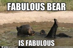 Funny Animal Captions - Fabulous Bear