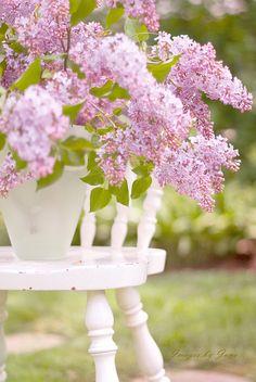 Freshly cut lilacs by Jane Anastasia Studio