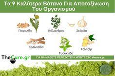 Ποια είναι τα καλύτερα βότανα για να αποτοξινώσετε τον οργανισμό σας. #Διατροφή Health Fitness, Herbs, Herb, Fitness, Health And Fitness, Medicinal Plants
