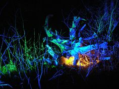 Lightpainting, Lightsculpture... circa 2007 i built some high powered coloured LED flashlights and shot them at a tree root system.   What I mean is one night I stayed in a park past closing time, and stumbled on wild revelry in a fairy castle.