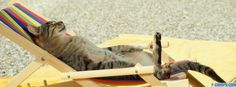 just chillin cat facebook cover