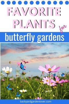 If you enjoy seeing butterflies around your garden, plant a few of these butterfly garden favorites.  #flowergarden #butterflygarden #pollinatorgarden #flowers #butterflies Butterfly Garden Plants, Plants That Attract Butterflies, Planting Flowers, Flower Gardening, Container Gardening, Easy Care Plants, Deer Resistant Plants, Light Blue Flowers, Hardy Perennials