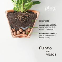 how to plant potted adam rib plug design- como plantar costela de adão em vaso plug design how to plant potted adam rib plug design - Potted Plants, Garden Plants, Indoor Plants, Vegetable Garden Planning, Home Vegetable Garden, Eco Garden, Indoor Garden, Balcony Flowers, Plants Are Friends