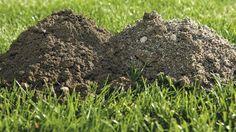Spoznajte úrodné a menej úrodné typy pôdy