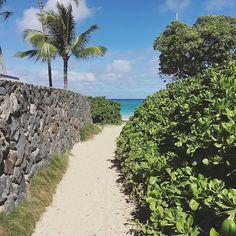 【aromatherapy_eluahawaii】さんのInstagramをピンしています。 《・・・ なんだかんだ1番好きなビーチ。 この小径を通るたびにいつもわくわくする✨ * * * #hilife#aromatherapy#amazing#awesome#beautiful#beach#ocean#path#blue#green#white#happiness#hawaii#lanikai#aloha#sea#paradise#海#ビーチ#小径#エメラルドグリーン#青空#暑い#しあわせ#ハワイ在住#ハワイライフ#ハワイ#ラニカイ #ラニカイへの道 #わくわくする》