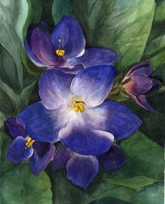 african violets pictures | african_violets