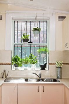 Good idea for hanging plants over a window