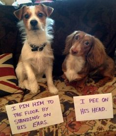 Dog Shaming Pictures. Please Repin Thank you