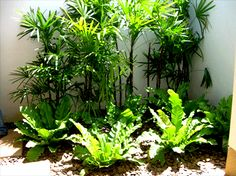 Marvelous Tropical Landscaping Ideas Section 4 - Tropical Garden Design Ideas Landscaping Along Fence, Backyard Pool Landscaping, Tropical Landscaping, Landscaping With Rocks, Backyard Landscaping, Landscaping Ideas, Tropical Backyard, Backyard Plants, Backyard Designs
