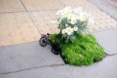 Jardim Pothole Mini com Daisy e uma bicicleta