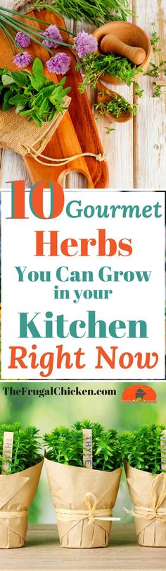 Want fresh, organic ingredients right at your fingertips? Here's 10 gourmet herbs you can grow in your kitchen, and foolproof directions to grow them!