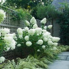 "Lush hydrangeas detail of ""secret"" garden"