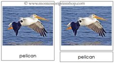 4. Birds Montessori 3-Part Classified Cards - Printable Montessori Learning Materials for home and school.