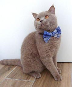 Cat Bow Tie Collar Plaid Flannel Dog Bow Tie Collar Pet Bow