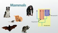 Classification aims & principles EM Branches Of Biology, Mammals, Ems