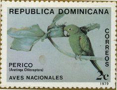 Aves indígenas Aratinga chloroptera Periquito antillano 12/09/79 República Dominicana