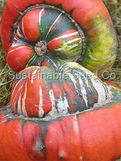 Turk's Turban Squash - Heirloom Seeds: Sustainable Seed Company