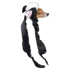 Casual Canine 16-Inch Polyester Little Stinker Skunk Dog Costume, Medium, Black/White