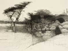Mary Sprague | Recent Art | Tree Drawings Gallery